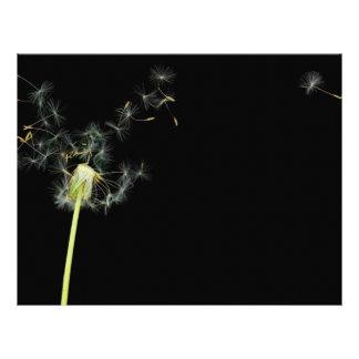 Flower - Dandelion - Gesundheit Flyer