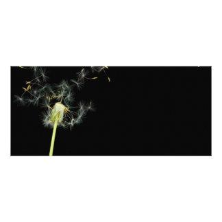 Flower - Dandelion - Gesundheit Rack Card
