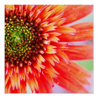 Flower Delight Poster