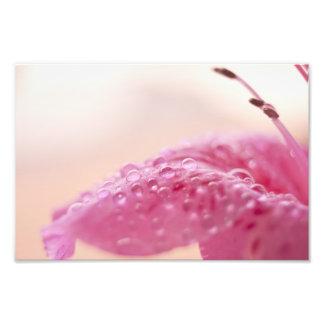 Flower Dew Drops Photo Art