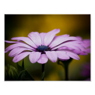 Flower, drop of rain poster