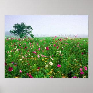 Flower Field of Kentucky Poster