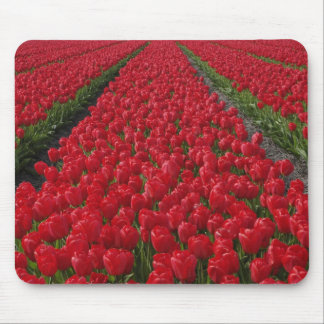 Flower field of tulips, Netherlands, Holland Mouse Mat