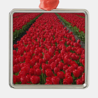 Flower field of tulips, Netherlands, Holland Silver-Colored Square Decoration