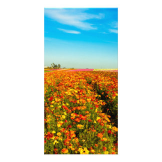 Flower Fields of California Card