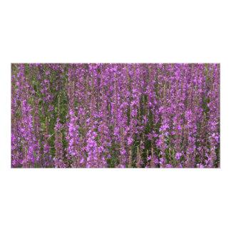 Flower fields photo cards