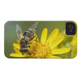 Flower Fly on Tansy Ragwort iPhone 4 Case-Mate Cases