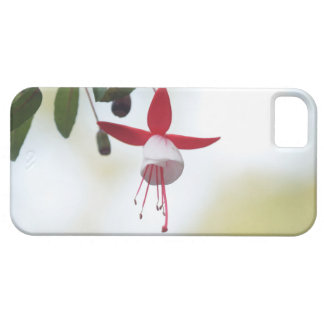 Flower Fuchsia Case For The iPhone 5
