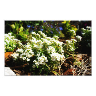 Flower Garden Art Photo