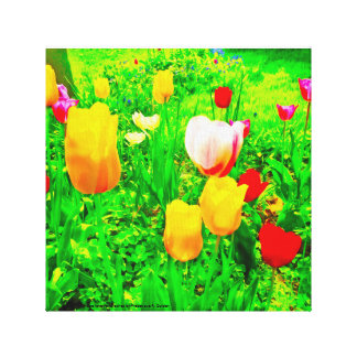 Flower Garden Tulips Canvas Print