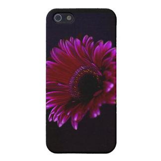 Flower Gerbera Speck Case iPhone 5 Case
