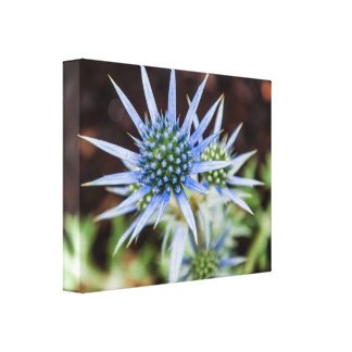 Flower Growing Wrapped Canvas
