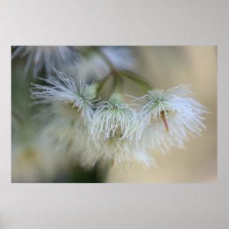 Flower Gum - Australian Native Tree Poster