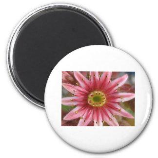 flower,hen and chicks bloom 6 cm round magnet