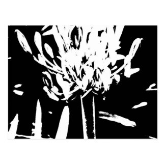 Flower in Black and White Postcard