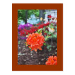 Flower In Garden Postcard