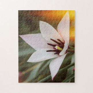 flower in the garden jigsaw puzzle