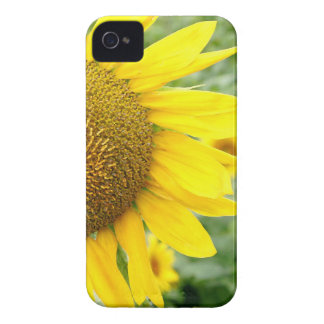 Flower iPhone 4 Cases Sunflower