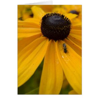 Flower Life- Black Eyed Susan Card