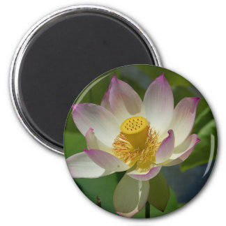 Flower Lily On Water Beautiful White Flower Fridge Magnets
