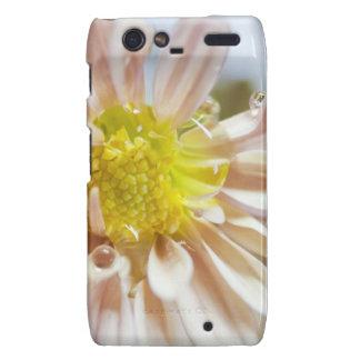 Flower Macro and Water Drop Motorola Droid RAZR Covers