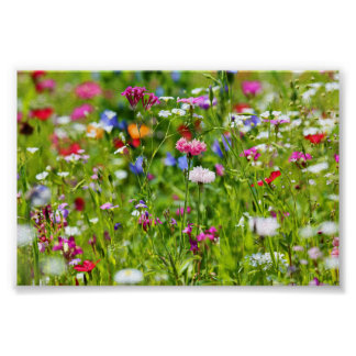 Flower meadow poster