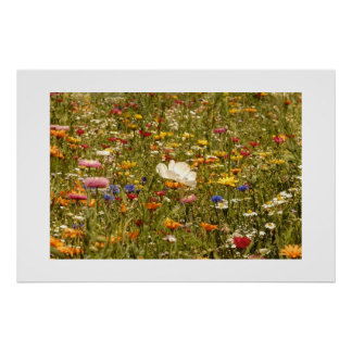 Flower - Meadow Poster