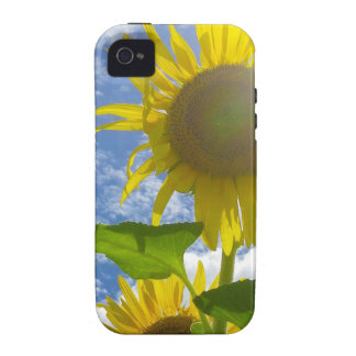 Flower mf 501 iPhone 4/4S cases