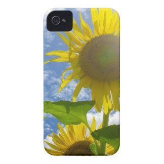 Flower mf 501 iPhone 4 cases