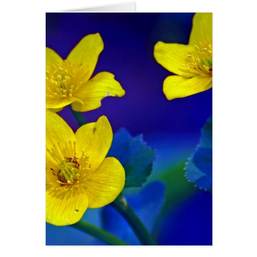 Flower mf 518 cards