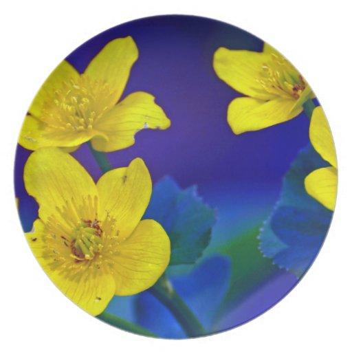 Flower mf 518 dinner plate