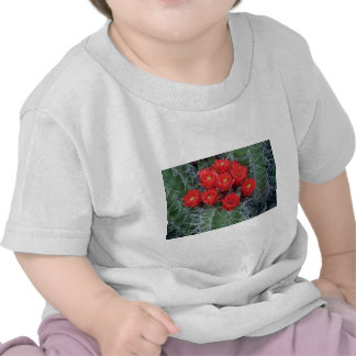Flower of claret cup cactus flowers tee shirt