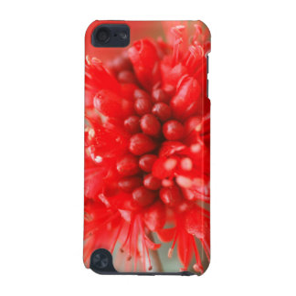 Flower Of Dwarf Boerbean, Sabi Sands iPod Touch (5th Generation) Cover