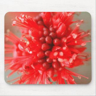 Flower Of Dwarf Boerbean, Sabi Sands Mouse Pad