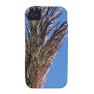 Flower of Giant reed plant iPhone 4 Cases
