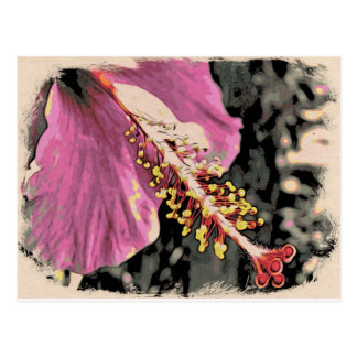 Flower of Hibisco Rosa Postcard