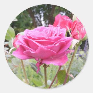 Flower of Love Rose Classic Round Sticker