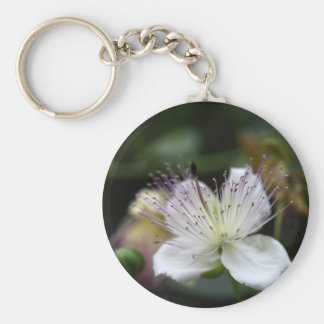 Flower of the caper bush, Capparis spinos. Basic Round Button Key Ring