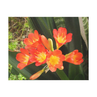 Flower of the Lily Family Canvas Print