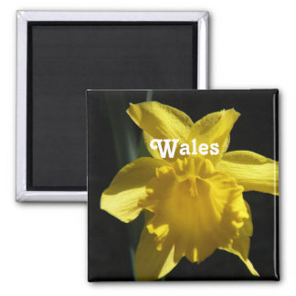 Flower of Wales Square Magnet