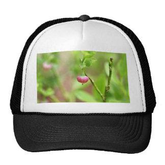 Flower on a European Blueberry bush Cap