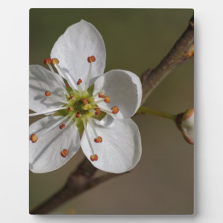 flower on tree in spring plaque