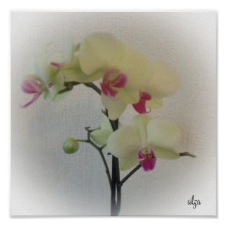 Flower Orchid Poster 2