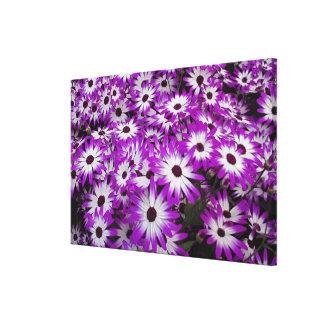 Flower pattern, Kuekenhof Gardens, Lisse, Stretched Canvas Print