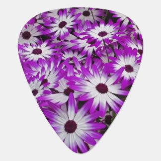Flower pattern, Kuekenhof Gardens, Lisse, Guitar Pick
