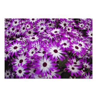 Flower pattern, Kuekenhof Gardens, Lisse, Photo Art