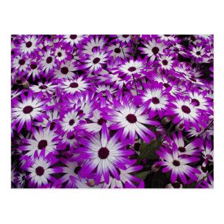 Flower pattern Kuekenhof Gardens Lisse Post Cards