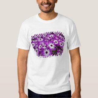 Flower pattern, Kuekenhof Gardens, Lisse, Shirt
