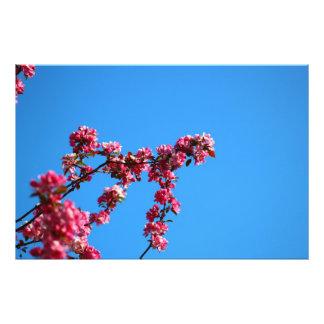 Flower Photo Art