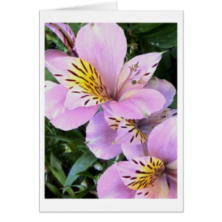 "Flower Photography - ""Pink Flower 14"" Greeting Card"